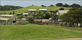 Ace Hi Riding Ranch - Accommodation Tasmania