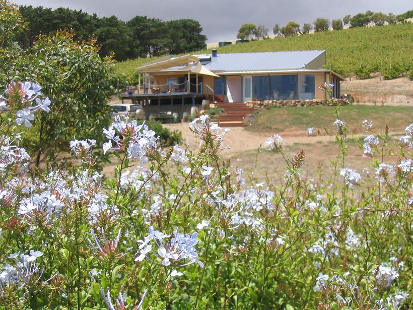The Blue Grape Vineyard Accommodation - Accommodation Tasmania