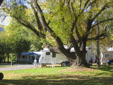 Tumbarumba Creek Caravan Park - Accommodation Tasmania