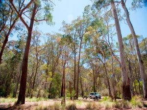 Coolah Tops National Park Camping - Accommodation Tasmania