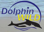 Dolphin Wild - Accommodation Tasmania
