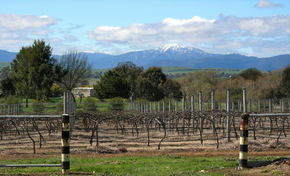 Buller View Wines - Accommodation Tasmania