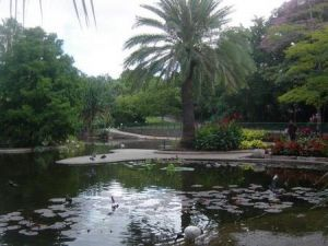 Brisbane City Botanic Gardens - Accommodation Tasmania
