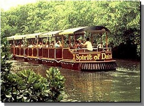 Daintree Rainforest River Trains