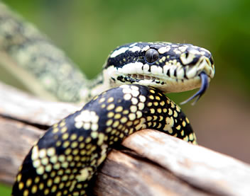 Reptile Encounters - Accommodation Tasmania