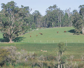 Scenic Drives - Bunbury Collie Donnybrook - Accommodation Tasmania