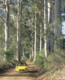 Mount Shadforth Scenic Drive - Accommodation Tasmania