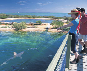 Shark Bay Marine Park - Accommodation Tasmania