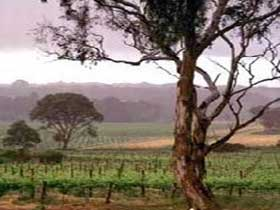 Yangarra Estate Vineyard - Accommodation Tasmania