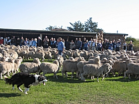 Curringa Farm - Accommodation and Farm Tours - Accommodation Tasmania