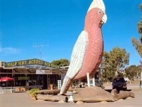 The Big Galah - Accommodation Tasmania