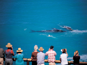 Whale Watching At Head Of Bight - Accommodation Tasmania
