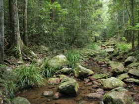 Amamoor State Forest - Accommodation Tasmania