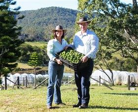 Hinterland Feijoas - Accommodation Tasmania