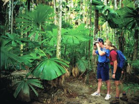 Mount Sorrow Ridge Trail Daintree National Park