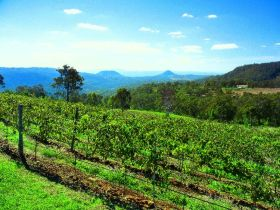 Preston Peak Wines - Accommodation Tasmania