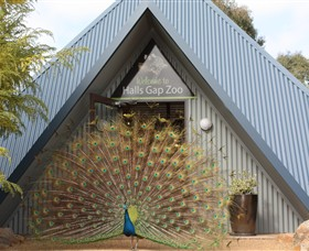 Halls Gap Zoo - Accommodation Tasmania