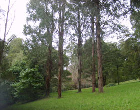 Mount Dandenong Arboretum - Accommodation Tasmania