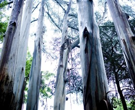 Dandenong Ranges National Park - Accommodation Tasmania