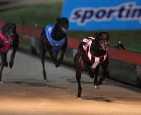 Dapto Dogs - Accommodation Tasmania