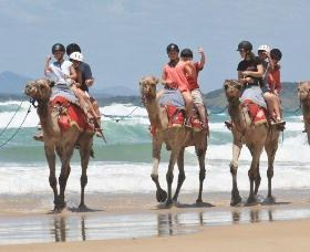 Camel Rides with Coffs Coast Camels - Accommodation Tasmania