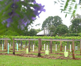 Douglas Vale Historic Homestead  Vineyard - Accommodation Tasmania