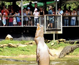 Crocodylus Park - Accommodation Tasmania