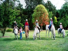 Limestone Coast Horseriding - Accommodation Tasmania