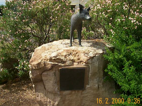 Dingo Statue - Accommodation Tasmania