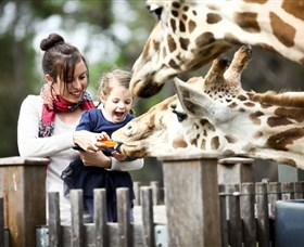 Taronga Western Plains Zoo Dubbo - Accommodation Tasmania