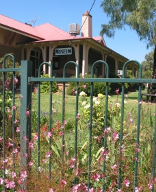 Dunedoo Local Museum - Accommodation Tasmania