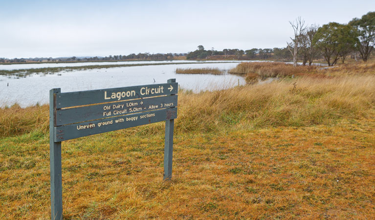 Lagoon Circuit walking track - Accommodation Tasmania
