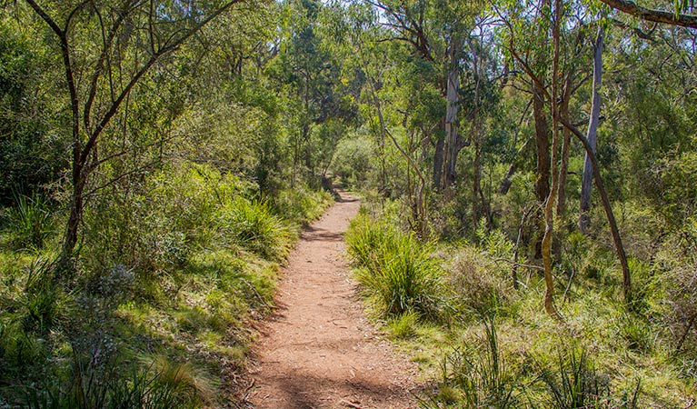 Mares Forest Creek walking track - Accommodation Tasmania