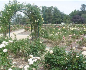 Victoria Park Rose Garden - Accommodation Tasmania
