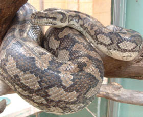 Armadale Reptile Centre - Accommodation Tasmania