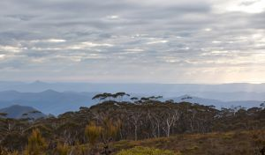 Mount Budawang trail - Accommodation Tasmania