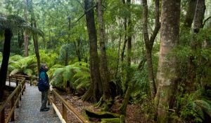 Monga National Park - Accommodation Tasmania