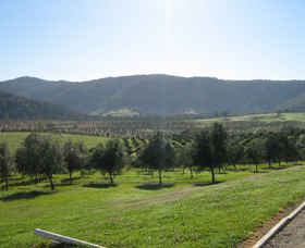 Hastings Valley Olives - Accommodation Tasmania