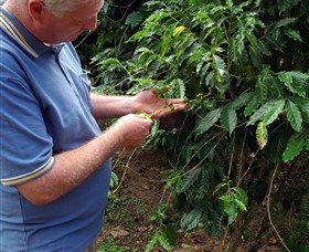 Wombah Coffee Plantation - Accommodation Tasmania