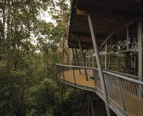 Tarkine Forest Adventures - Dismal Swamp - Accommodation Tasmania