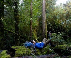 The Tarkine Drive - Accommodation Tasmania
