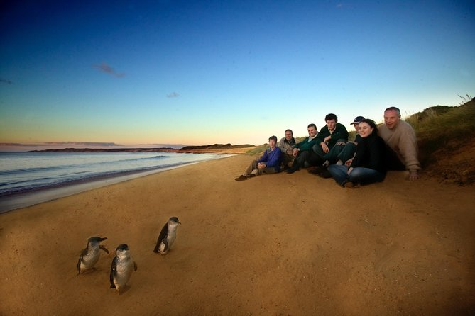 Phillip Island Ultimate Penguin Eco Tour or Skybox Experience - Accommodation Tasmania