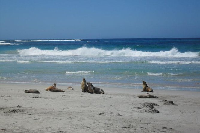 Kangaroo Island in a Day Tour from Adelaide - Accommodation Tasmania