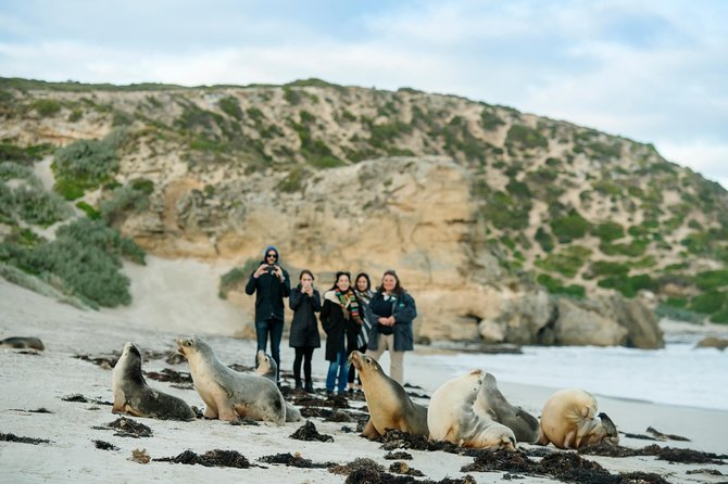 Small-Group Kangaroo Island 4WD Tour from Adelaide - Accommodation Tasmania