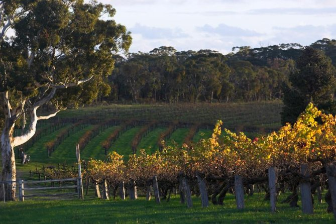 Barossa Valley with Hahndorf Tour from Adelaide - Accommodation Tasmania