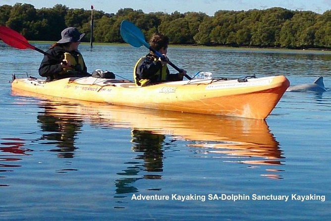 Dolphin Sanctuary and Ships Graveyard Kayak Tour - Accommodation Tasmania