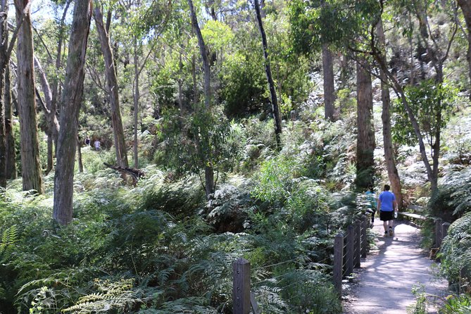 Self-Guided Waterfall Gully to Mount Lofty Hike from Adelaide - Accommodation Tasmania