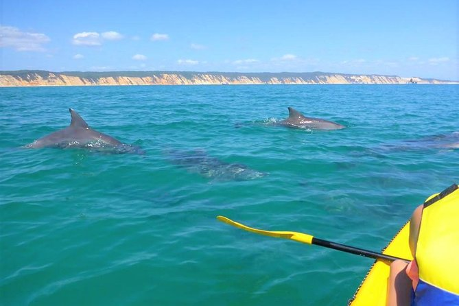 Half-Day Kayak with Dolphins and 4WD Beach Drive from Rainbow Beach - Accommodation Tasmania