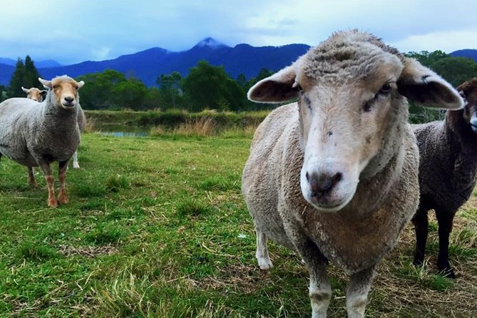 Trevena Glen Farm Animal Experience - Accommodation Tasmania