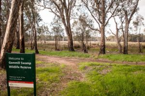 Gemmill Swamp Wildlife Reserve - Accommodation Tasmania
